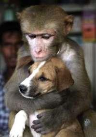 No sólo los seres humanos son capaces de querer y preocuparse por animales de especies distintas.